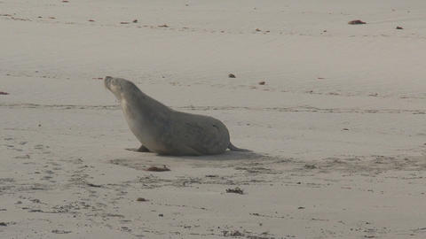 Sea lions waiting at the beach Stock Video Footage