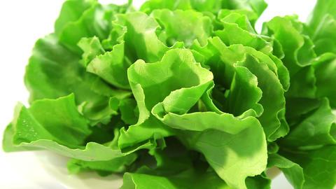 Beautiful green salad Footage
