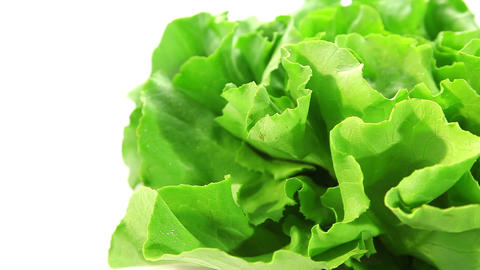 Fresh lettuce Stock Video Footage