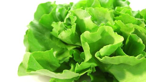 Fresh lettuce Footage