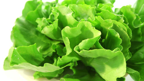Fresh lettuce Stock Video Footage