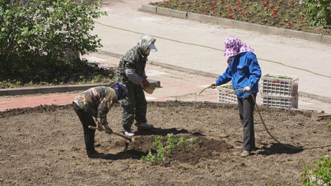 Chinese women planted flowers in the flowerbed 02 Stock Video Footage
