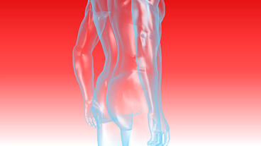 3D transparent human nude body Animation