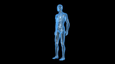 3D transparent human nude body & skeleton Stock Video Footage