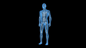 3D transparent human nude body & skeleton Animation