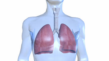 human body & breathing lungs Stock Video Footage