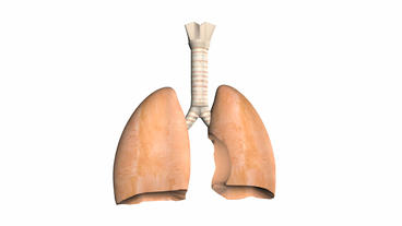 breathing lungs animation Animation