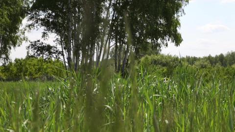 Field Footage
