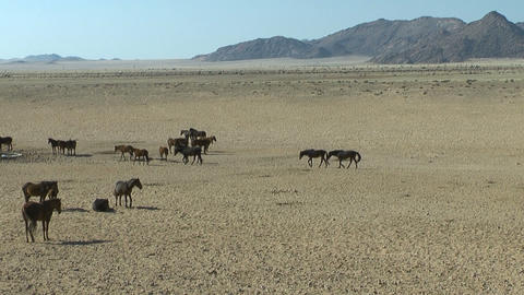 wild horses in african desert Stock Video Footage