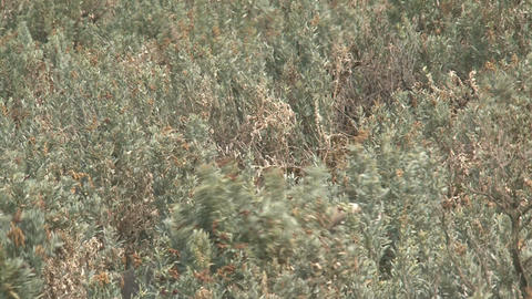 Sea lion waking up between plants Stock Video Footage