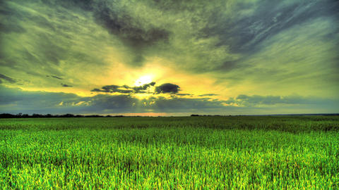 Morning In A Wheat Field. HDR Time Lapse Stock Video Footage