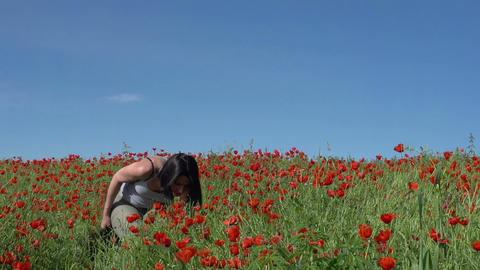 Walk in the Poppy Field Stock Video Footage