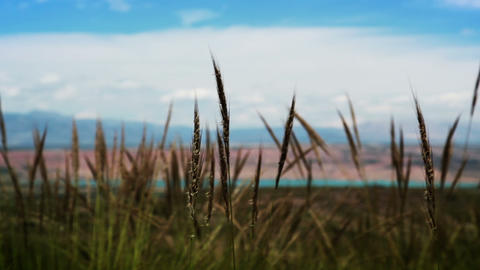 Prairie Grass stock footage