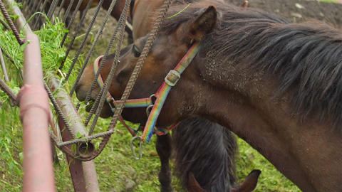 Horse eats from manger Stock Video Footage