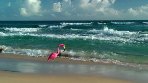 Plastic flamingo on Isabel Beach Stock Video Footage