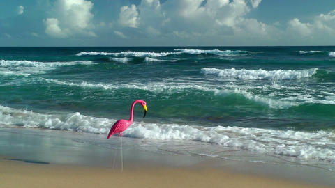 Plastic flamingo on Isabel Beach Footage