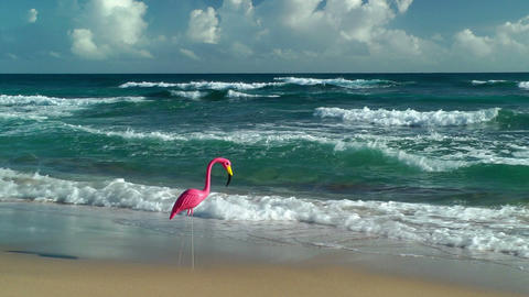 Plastic flamingo on Isabel Beach Stock Video Footage