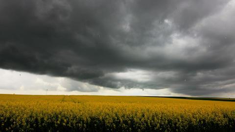 Schwarze Wolken und schwerer Regen über Rapsfeld Stock Video Footage
