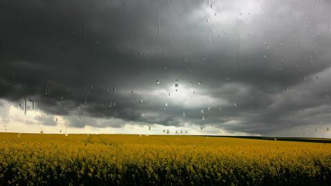 Schwarze Wolken und schwerer Regen über Rapsfeld Footage