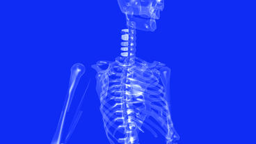 human skeleton animation Stock Video Footage