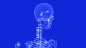 human skeleton animation Stock Video Footage
