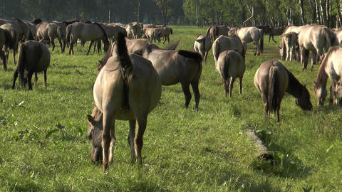 wild horse fighting with mosquito Stock Video Footage