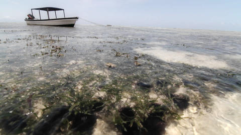Boat at low tide with water moving & plant life Stock Video Footage