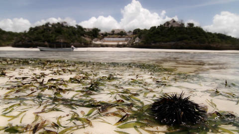 Focus on sea urchin with resort in background Stock Video Footage