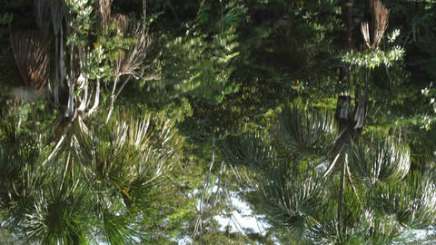 Rain forest reflection on rippled water Footage