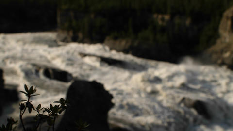Focus shift from plant to rapid river Stock Video Footage
