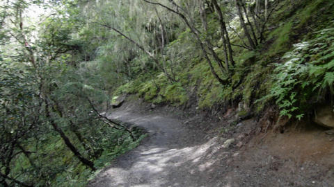 Trail through old forest Stock Video Footage