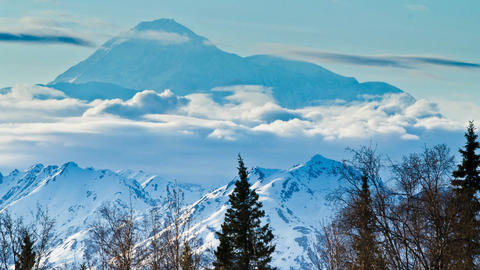 Denali in background with trees Stock Video Footage