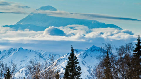 Denali in background with trees Footage