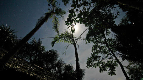 Moon passes overhead through the trees Stock Video Footage