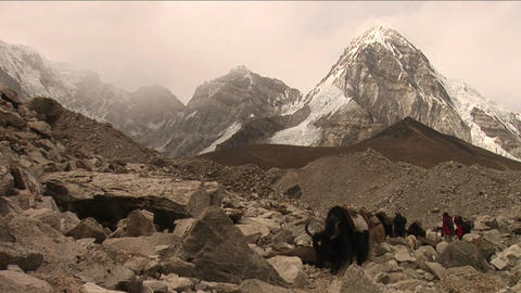Yaks, trekkers and porters crossing rough trail Stock Video Footage