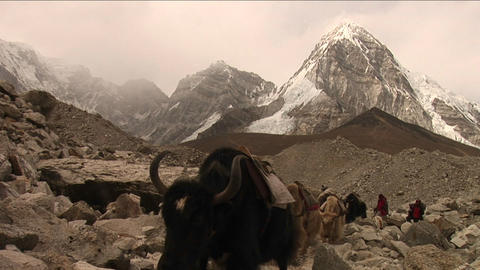 Yaks, trekkers and porters crossing rough trail Footage