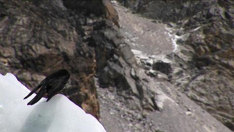 Bird sitting on ice ruffling feather Stock Video Footage
