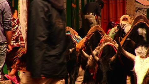 Yaks passing through Lukla Stock Video Footage