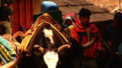 Yaks passing through Lukla Stock Video Footage
