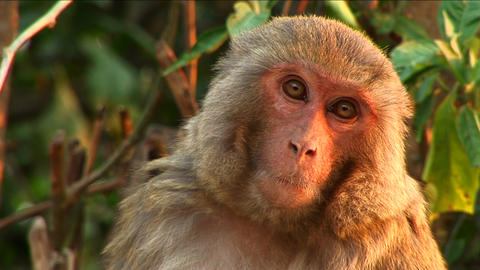 Close-up of monkey Stock Video Footage