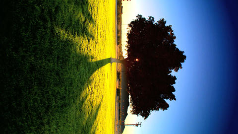 Vertical shadows cast by sun rising behind a tree Stock Video Footage
