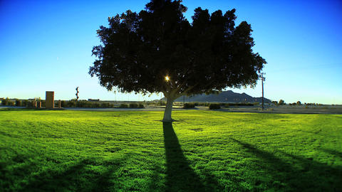 Shadows from sunrise behind a tree Stock Video Footage