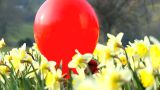 Girl And Red Balloon stock footage