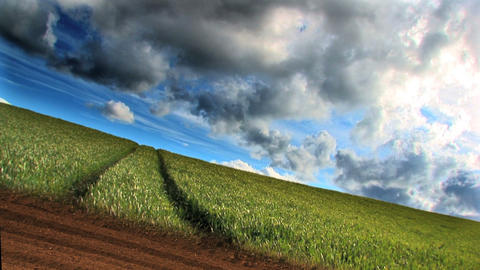 Dramatic time-lapse clouds over a field of growing wheat Stock Video Footage