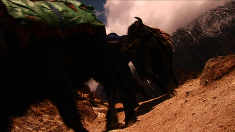Yaks passing on trail on the way to Mt. Everest. Stock Video Footage