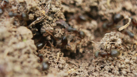 Ants 2 Stock Video Footage