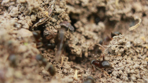 Ants 2 Footage