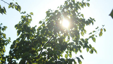 Sun in Trees Stock Video Footage