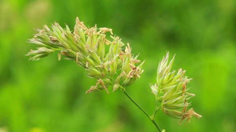 Grass 5 Footage