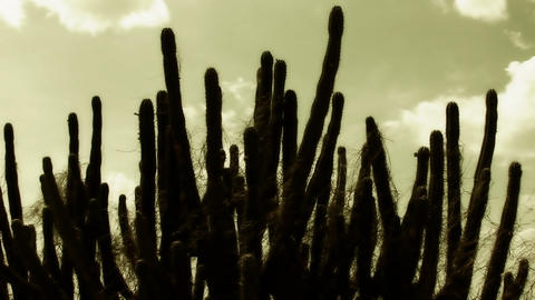 Cactus Timelapse 06 Stock Video Footage